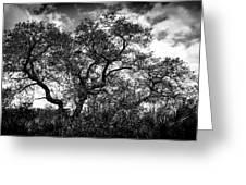 Prairie Oak Greeting Card