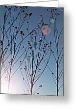 Prairie Plants Greeting Card