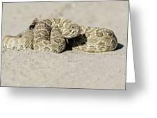 Prairie Rattlesnake  Greeting Card