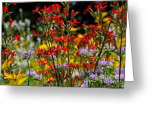Prairie Wildflowers 2 Greeting Card