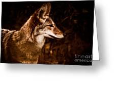 Prairie Wolf Portrait Greeting Card