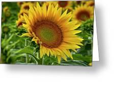 Praising The Sun Greeting Card
