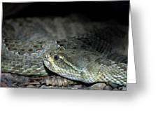 Prarie Rattle Snake Greeting Card