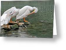 Prayer Of The Pelicans Greeting Card