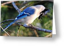 Praying Blue Jay Greeting Card