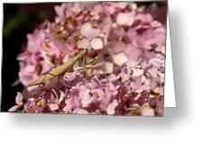 Praying Mantis Greeting Card