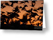 Pre-dawn Flight Of Snow Geese Flock Greeting Card