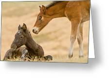 Precious Babies Greeting Card