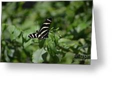 Precious Black And White Zebra Butterfly In The Spring Greeting Card