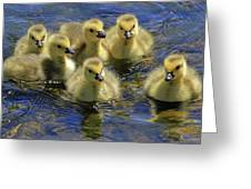 Precious Goslings Greeting Card