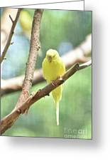 Precious Little Yellow Parakeet In The Wild Greeting Card