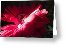 Precious Petals Greeting Card