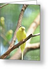 Precious Yellow Budgie Parakeeet In The Wild Greeting Card