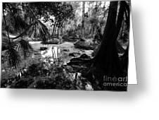 Precolumbian Florida Greeting Card