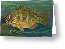Predatory Fish Greeting Card by Anna Folkartanna Maciejewska-Dyba