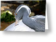 Preening Bird Greeting Card