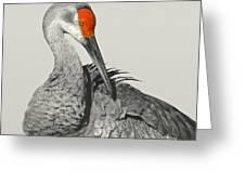 Preening Crane Greeting Card