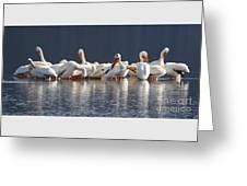 Preening Pelicans Greeting Card