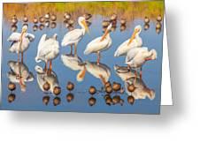 Preening Primping Pelicans Greeting Card