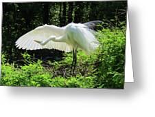Preening The Wings Greeting Card