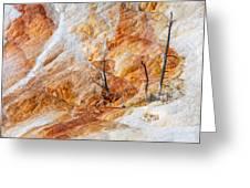 Prehistoric Trees Greeting Card