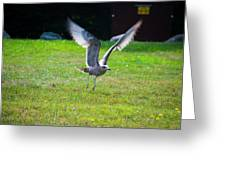 Prepare For Landing Greeting Card