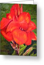 Presidential Canna Greeting Card