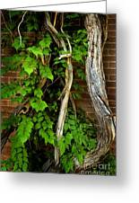 Preston Wall Vine Greeting Card