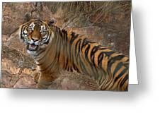 Pretoria Zoo Greeting Card