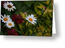 Pretty And Everlasting Greeting Card