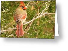 Pretty As A Picture  Greeting Card by Lori Frisch