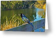 Pretty Bird At A Sunrise Greeting Card