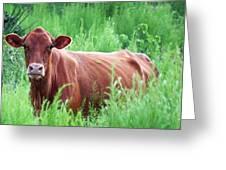 Pretty Brown Cow  Greeting Card