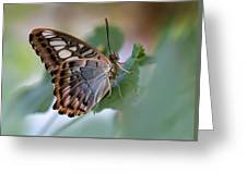 Pretty Butterfly Resting On The Leaf Greeting Card