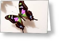 Pretty Butterfly Greeting Card