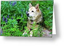 Pretty Dog Greeting Card