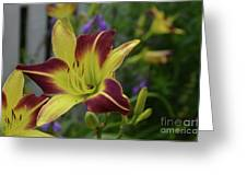 Pretty Flowering Lily In A Garden  Greeting Card