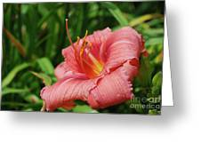Pretty Flowering Pink Lily In A Garden Greeting Card