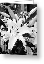 Pretty In Black And White Greeting Card