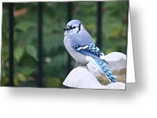 Pretty In Blue Jay Greeting Card