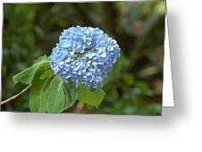 Pretty In Blue Greeting Card
