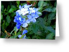 Pretty In Blue Photograph Greeting Card