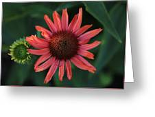 Pretty In Coral Greeting Card