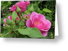 Pretty In Pink 3 Greeting Card