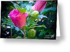 Pretty In Pink Hibiscus Flowers And Buds Greeting Card
