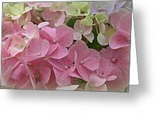 Pretty In Pink Hydrangeas Greeting Card