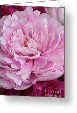 Pretty In Pink Peony Greeting Card