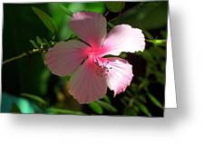 Pretty In Pink Photograph Greeting Card
