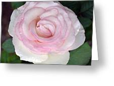 Pretty In Pink Rose Greeting Card