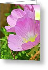 Pretty In Pink Two Greeting Card